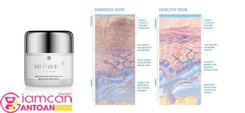 Kem Dưỡng Trắng Phục Hồi Sakura Absolute Perfect UV Protection Restorative Day Cream2