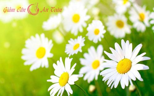 tri mun voi hoa cuc